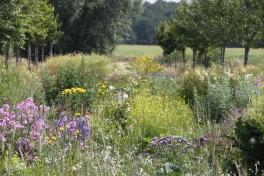 Veldje eetbare bloemen , kruiden en medicinale planten