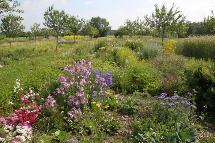 Veldje eetbaren bloemen en kruiden